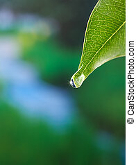 leaf with dewdrop showing giving and caring