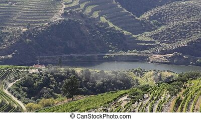 Terraced vineyards in Douro Valley - terraced vineyards in...