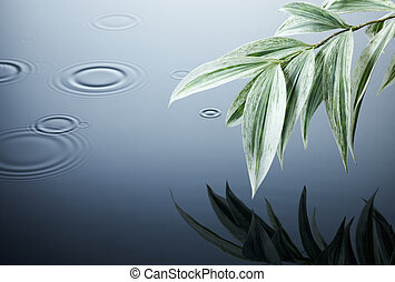 water, leaves and ripples - green plant and ripples in the...