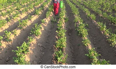 farmer spraying potato field - farmer with protective...