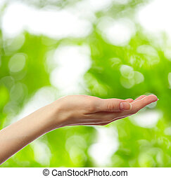 Female hand on young green leaves background