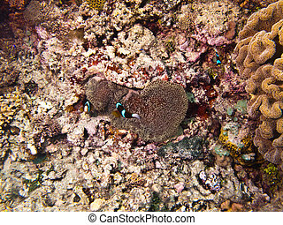 Underwater shot of the coral reef