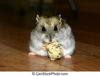 Cute little hamster having lunch - closeup photo
