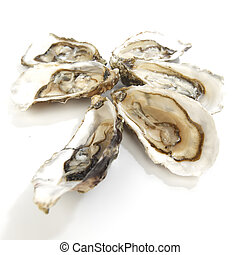 Oysters on white - Oysters isolated on white background