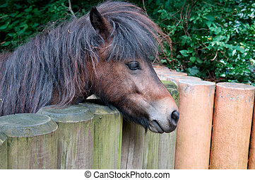 ponies and wooden fence
