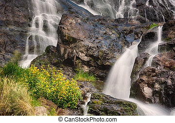 Todtnauer Waterfalls with yellow flowers, Black Forest,...
