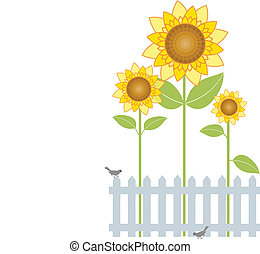 Sunflowers - Vector illustration of sunflowers behind a...