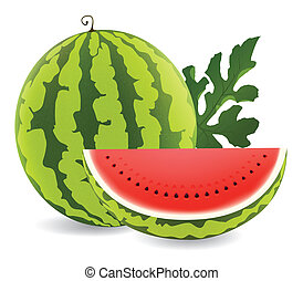 watermelon - illustration of juicy water melon kept on white...