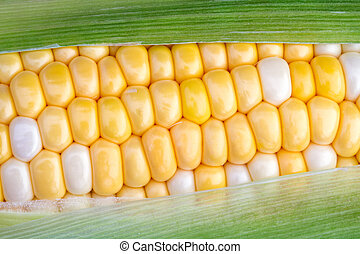 Sweet Corn on the Cob - The green husk is partially removed...