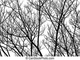 drzewo, gałązki, sylwetka, Wektor