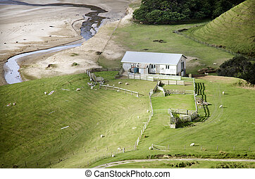 Sheep farm in New Zealand - Remote hill sheep farm station...