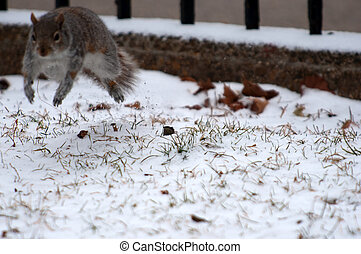 squirrel in the evening park