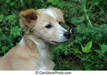 Butterfly on Dog\'s nose - While this K9 is busy looking far...