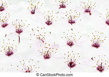 Cherry Plum or Myrobalan Blossoms, format filling as...