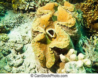 Large sea sponge underwater on a coral reef
