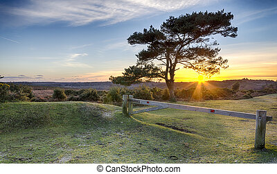 Sunset at Bratley View in the New Forest - A Starburst of...
