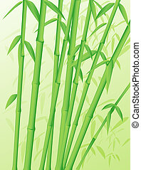 Bamboo Stalks - Green forest of bamboo stalks