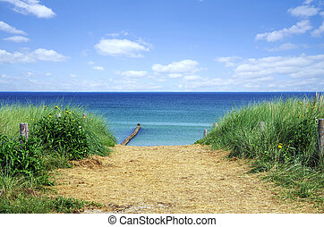 Ostsee - beach at baltic sea in zingst, fischland, germany