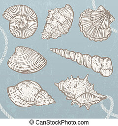 Seashells collection. - Set of hand-drawn, high-detailed...