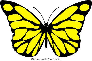 Malalachite butterfly - Siproeta stelenes - malalachite...