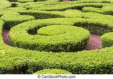 Boxwood in a park in Paris, France