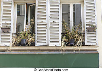 Traditional windows and shutters with dried up flowers