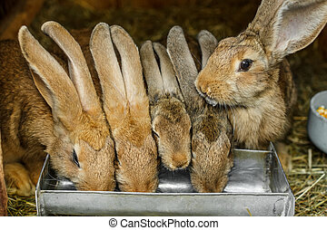 Rabbits drinking inside a cage