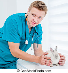 doctor veterenarii with a rabbit - doctor veterenarii in the...