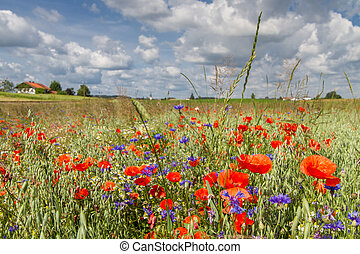 Spring flowers on a field in Bavaria, Germany