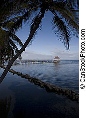 Palm trees overhanging the calm water - Palms overhang the...