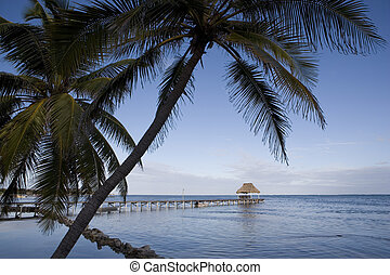 Palm trees and Pier on the Horizon - Palm trees hang over...