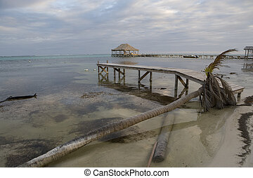 Small wooden pier and fallen palm tree - A fallen palm tree...