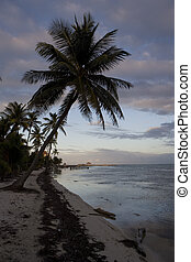 Overhanging Palms at Sunset - Palm trees overhang the calm...