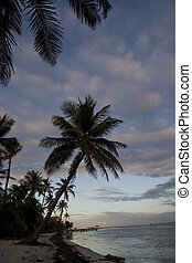 Palm trees on the coast at sunset - Palm trees crowd the...