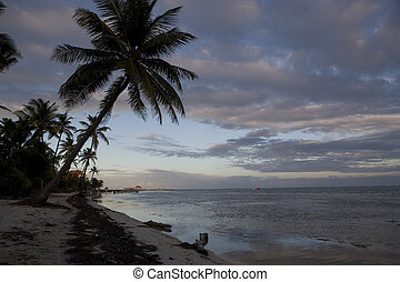 Palm tree and shoreline at sunset - Palm trees at sunset...