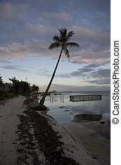 Palm tree and debris at sunset - A lone palm tree at sunset...