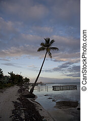 Lone palm tree at Sunset - A single palm tree on the...