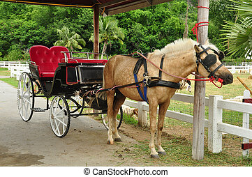 Horse and carriage in farm
