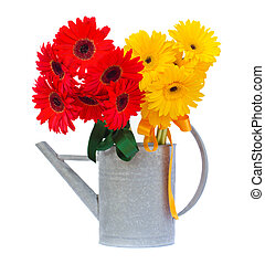 red and yellow gerbera flowers in watering can