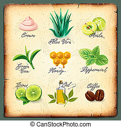 Set of natural cosmetics ingredients, vector Eps10 image