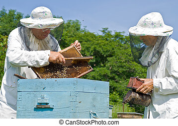 Beekeepers at hive 5 - Two beekeepers are at hive on an...