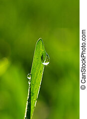 dew drop  - Dew drop on a blade of grass