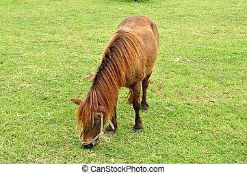 konie, pole