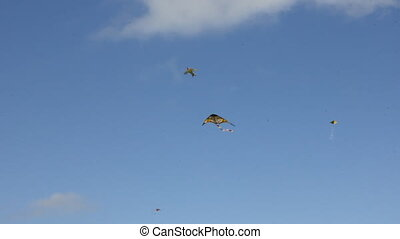 Kite flying under blue sky 8952
