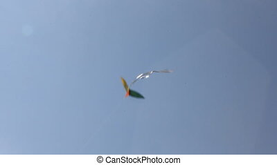 Kite flying under blue sky 8945