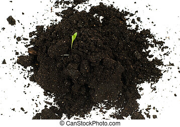 Germination - A small plant growing out of some topsoil,...