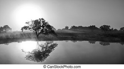 Llano Reflections