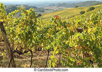 autumnal vineyards in Chianti - fantastic landscape with...