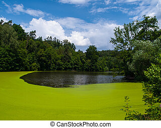 Green pond full of alga (Czech Republic)
