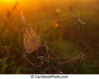 Spider web in morning sunlight (Bolivia)